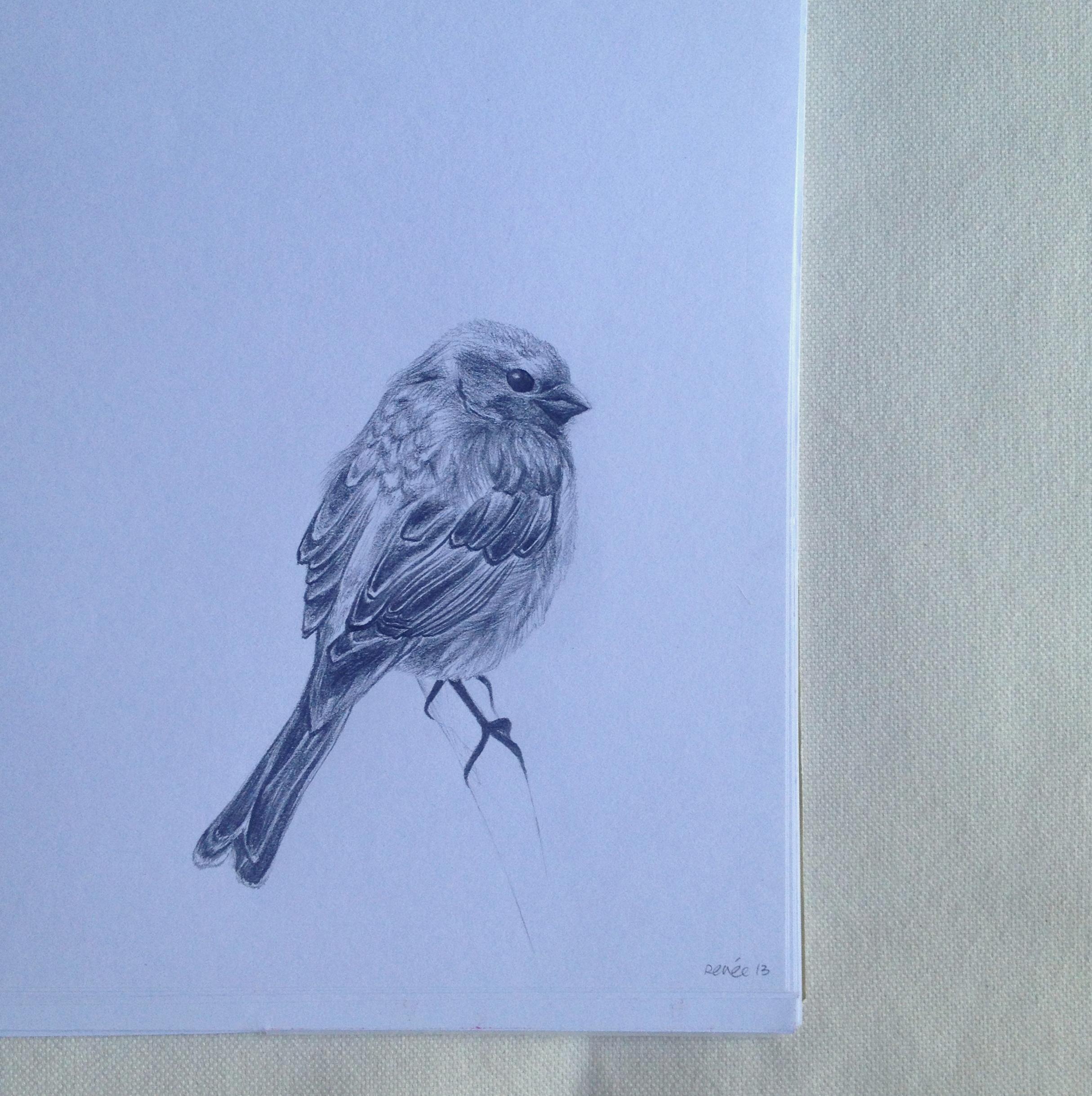 © Karen's Bird by Renée Nesbitt