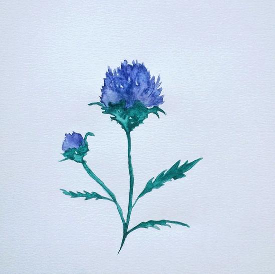 © Scotland's Flower by Renée Nesbitt