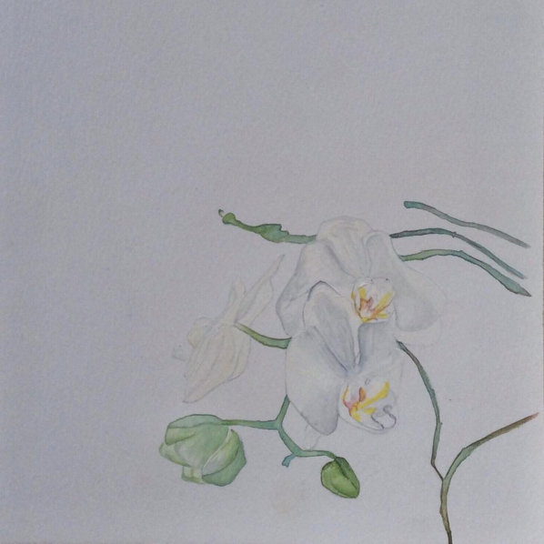© Watercolour Orchid by Renée Nesbitt